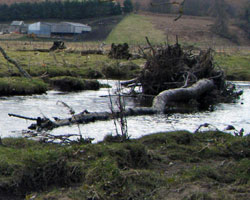 Large woody debris on the river coquet